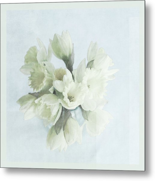 Daffodil Blue Metal Print by Beverly Cazzell