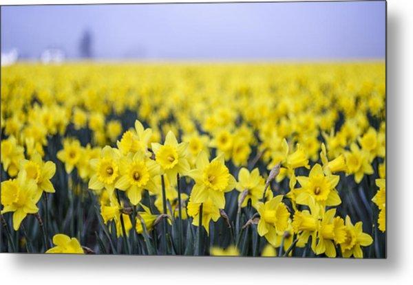 Daffodil Blur Metal Print