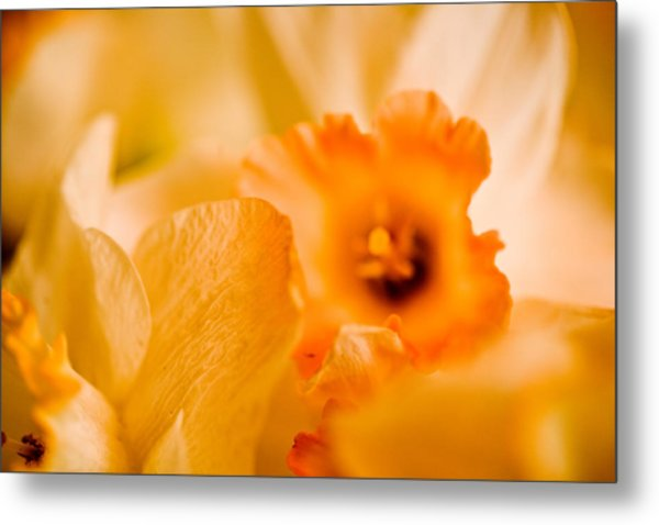 Daffodil Bouquet Metal Print by John Holloway