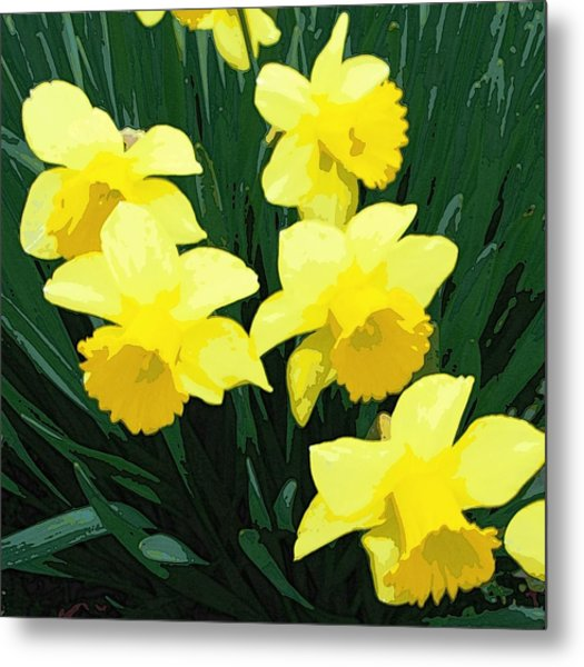 Daffodil Song Metal Print