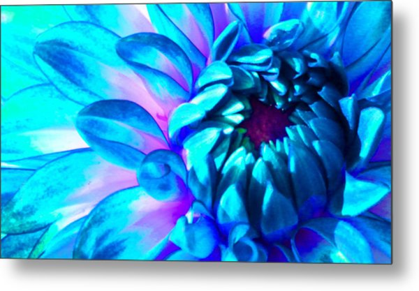 Dahlia In Pastel Metal Print by James Hammen