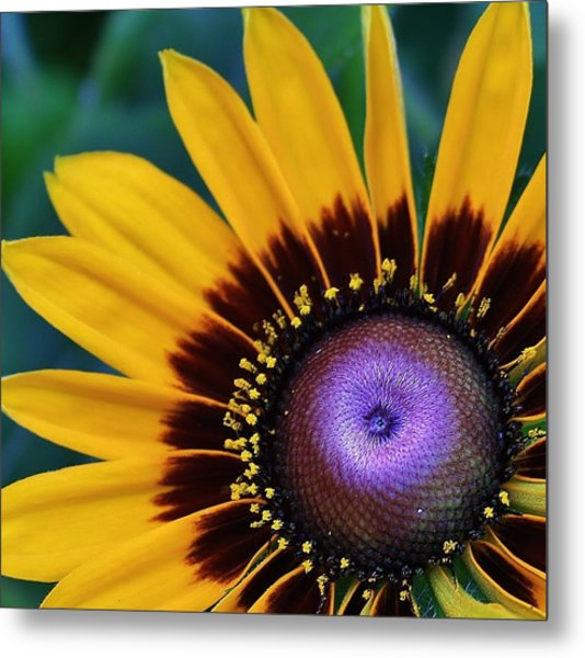 Daisey Of A Different Color Metal Print by Bruce Bley
