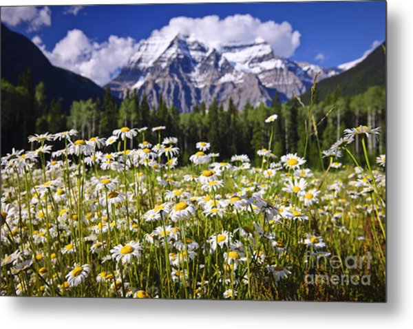 Daisies At Mount Robson Metal Print