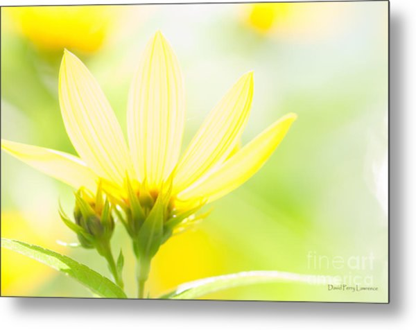 Daisies In The Sun Metal Print