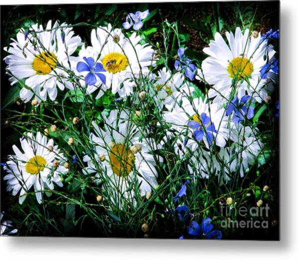 Daisies With Blue Flax And Bee Metal Print