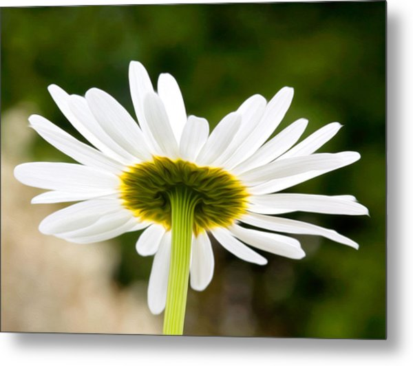 Daisy Metal Print by Bobbi Feasel