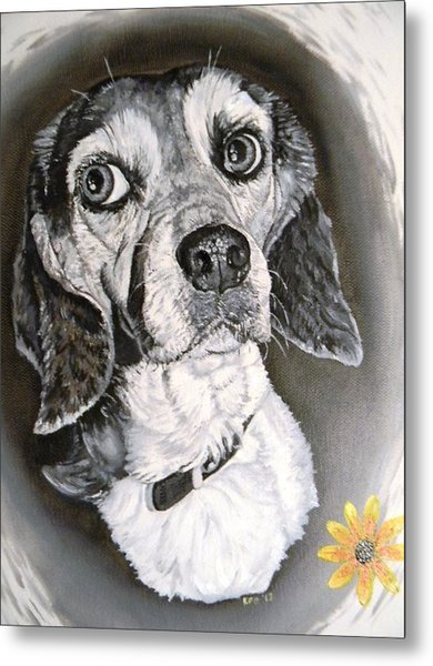 Daisy Dog Metal Print