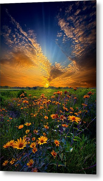 Daisy Dream Metal Print
