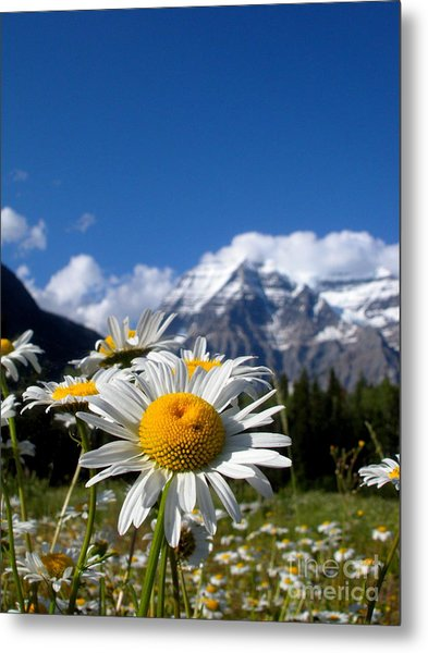 Daisy In Rocky Mountains Metal Print by Sophia Elisseeva
