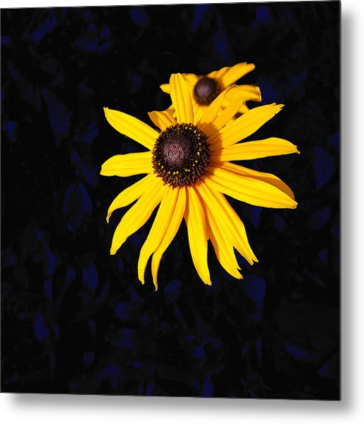 Daisy On Dark Blue Metal Print