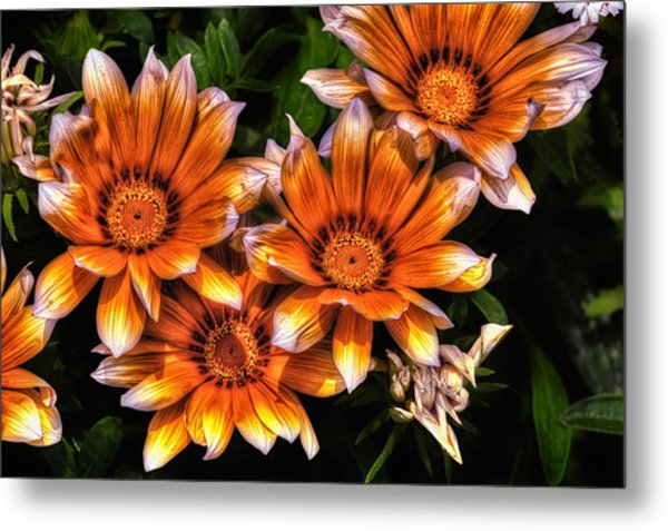 Daisy Wonder Metal Print