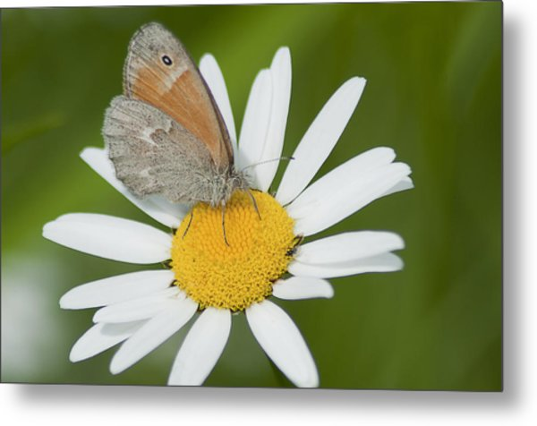 Daisy's Visitor Metal Print