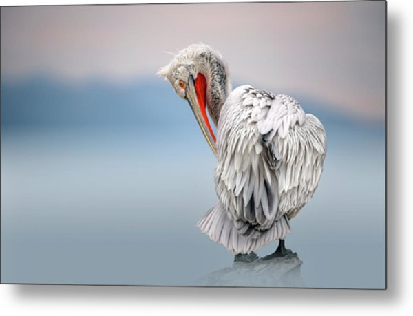 Dalmatian Pelican At Dawn Metal Print