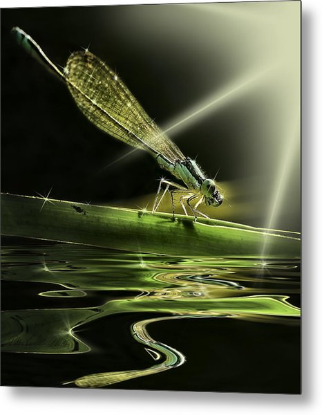 Damsel Dragon Fly  With Sparkling Reflection Metal Print