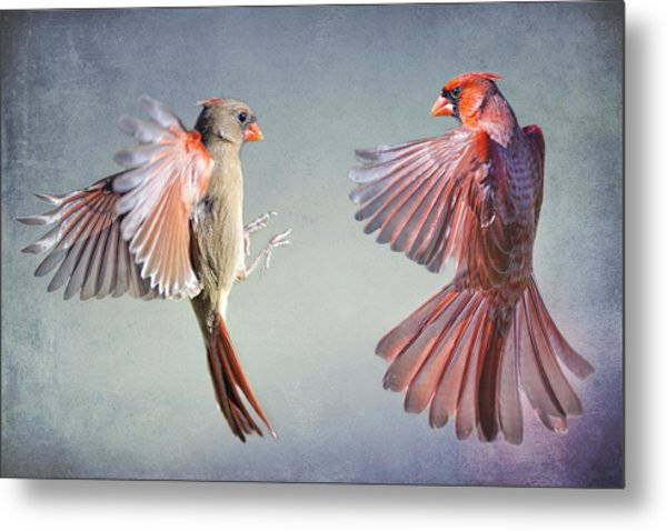 Dance Of The Redbirds Metal Print