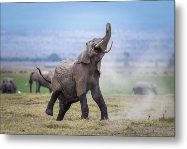 Dancing Elephant Metal Print by Jeffrey C. Sink