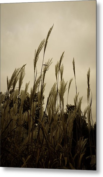 Dancing Grass Metal Print