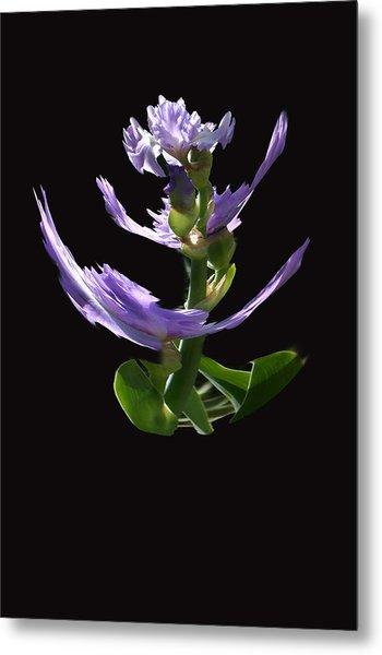 Dancing Iris 1 Metal Print