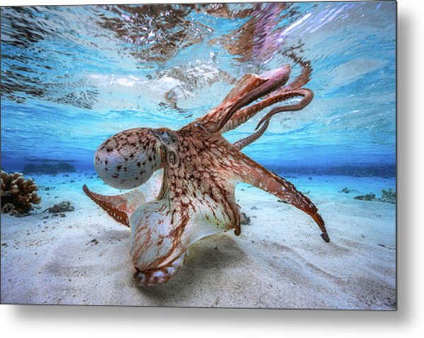 Dancing Octopus Metal Print