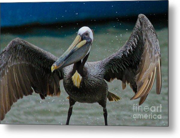 Dancing With A Pelican Metal Print
