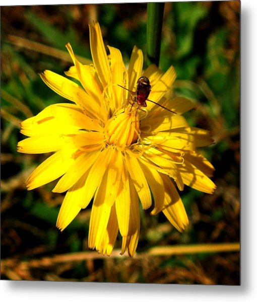 Dandelion And Bug Metal Print