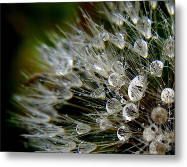 Dandelion Jewels Metal Print
