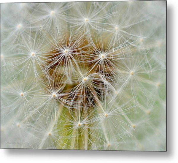 Dandelion Matrix Metal Print