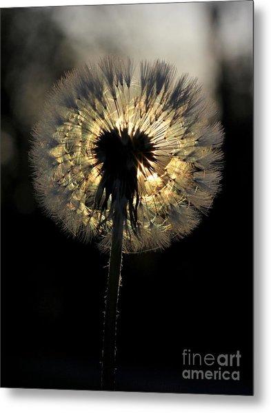 Dandelion Sunrise - 1 Metal Print