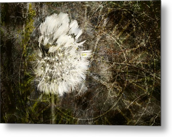 Dandelions Don't Care About The Time Metal Print