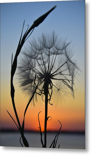 Dandy Lion Metal Print