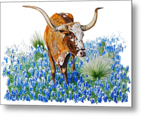 Da102 Longhorn And Bluebonnets Daniel Adams Metal Print