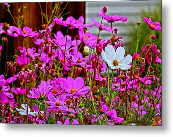 Dare To Be Different  Metal Print by Rebecca Adams