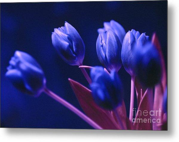 Dark Blue Tulips Metal Print
