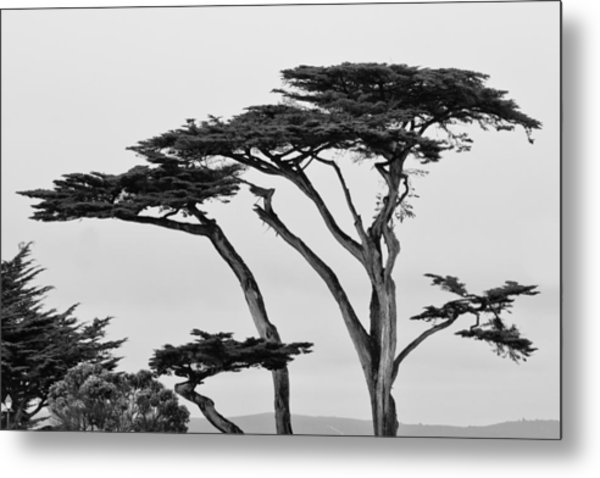 Dark Cypress Metal Print