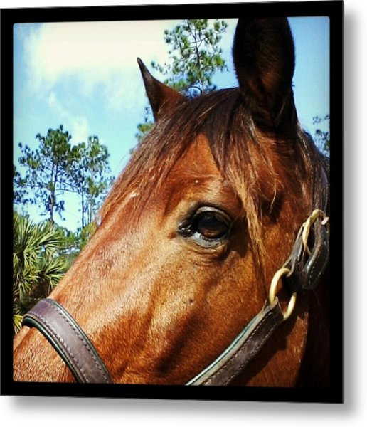 Dark Horse Metal Print by Chasity Johnson