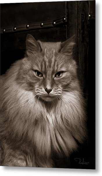 Dark Portrait Metal Print