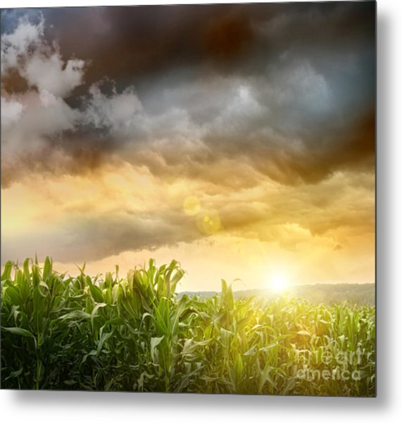 Dark Skies Looming Over Corn Fields  Metal Print