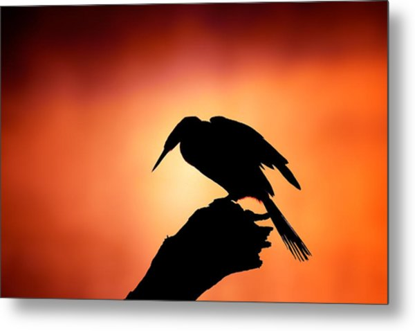 Darter Silhouette With Misty Sunrise Metal Print