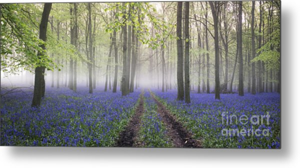 Dawn Bluebell Wood Panoramic Metal Print by Tim Gainey