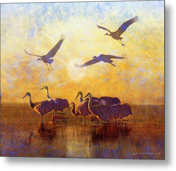 Dawn On The Bosque Sandhill Cranes Metal Print by R christopher Vest