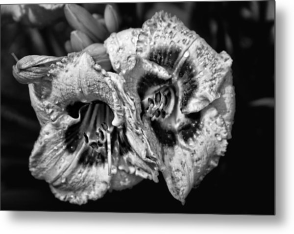 Day Lillies Metal Print