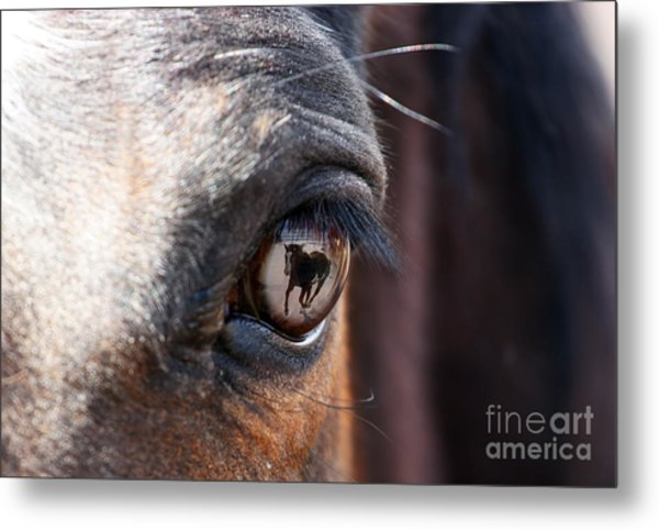 Daydream Of A Horse Metal Print