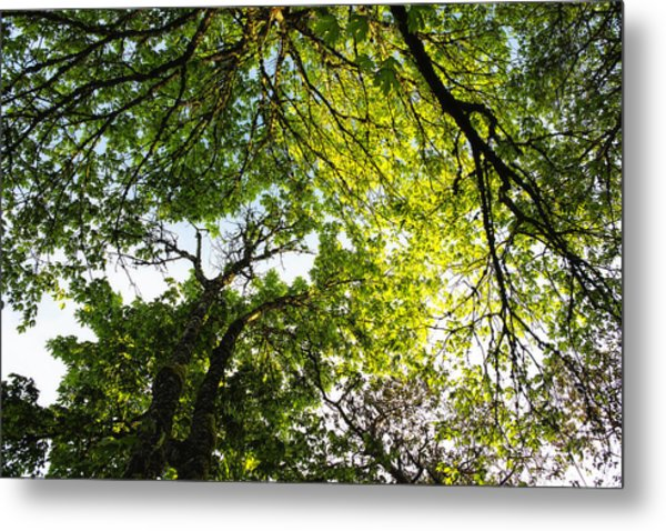 Metal Print featuring the photograph Daydreaming In The Hammock by Belinda Greb