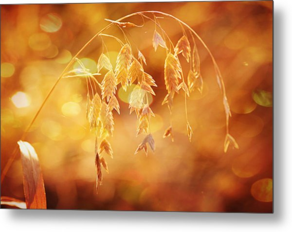 Daydreams In The Meadow Metal Print