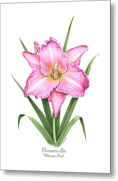 Daylily Ultimate Pink Metal Print