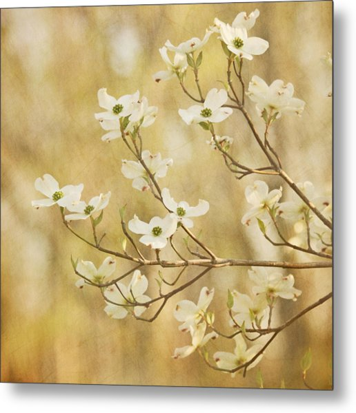 Metal Print featuring the photograph Days Of Dogwoods by Kim Hojnacki