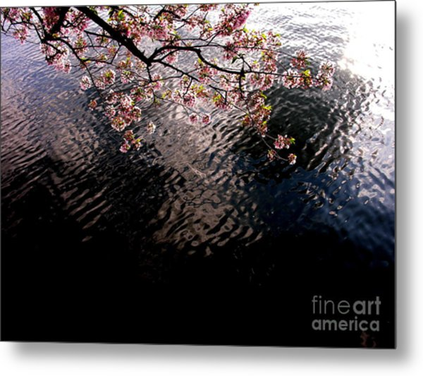 Dc Cherry And Black Metal Print by Jacqueline M Lewis