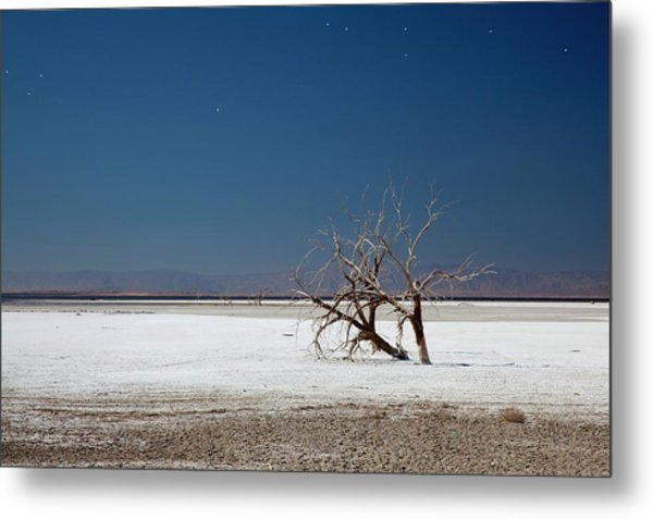 Dead Trees On Salt Flat Metal Print