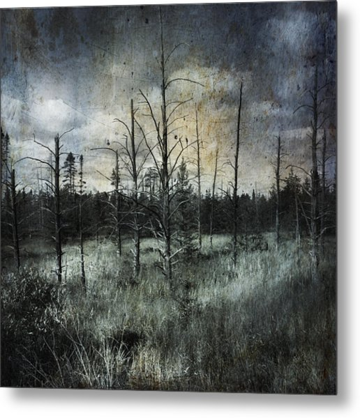 Deadwood Metal Print