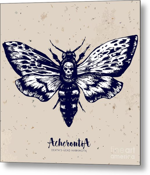Deaths-head Hawkmoth. Hand Drawn Vector Metal Print
